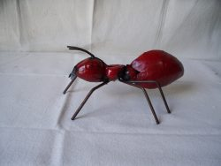 TIN_607__RED_ANT_4e44a46596541.jpg